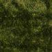AS Plush Green
